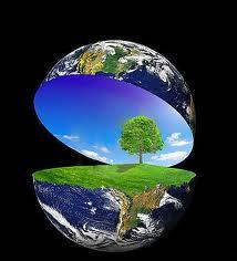 Día Mundial del Arbol