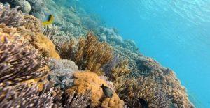fondo marino vista de arrecife de coral